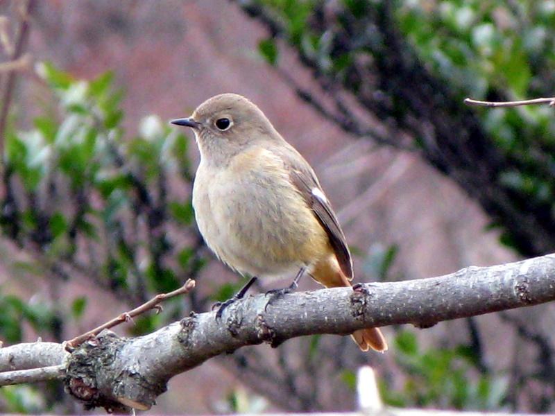 広島市植物公園の野鳥