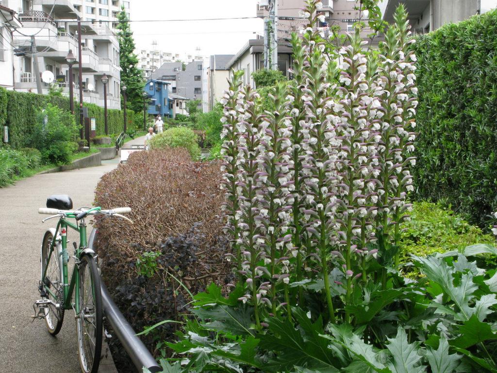 近所の緑道(・・・・・) with ケルビム号